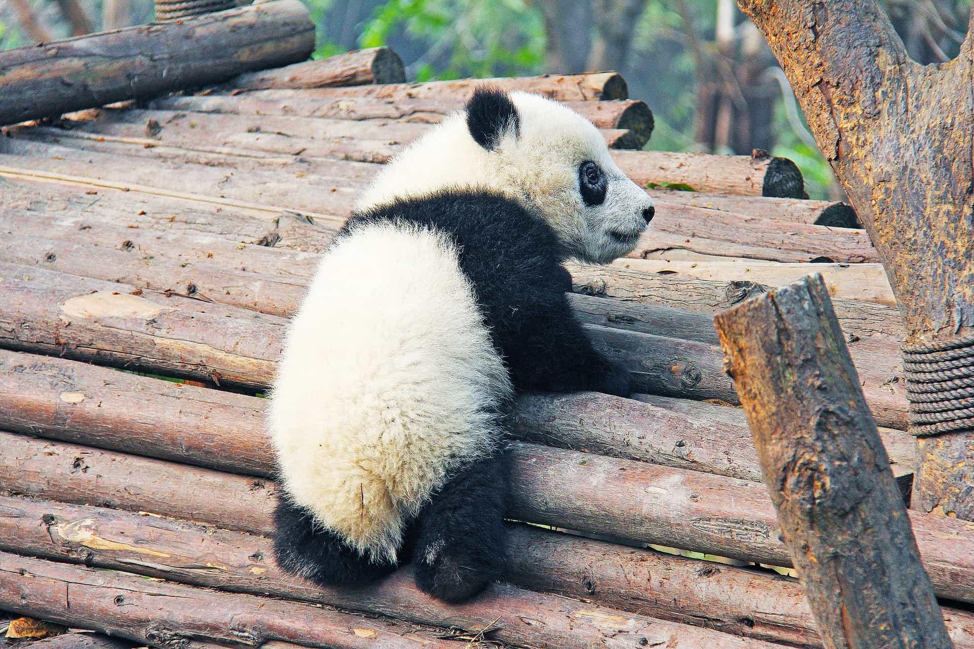 bedrohte Tierarten retten