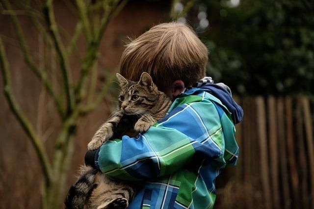 Retter in der Not - Katze hilft einem Kind