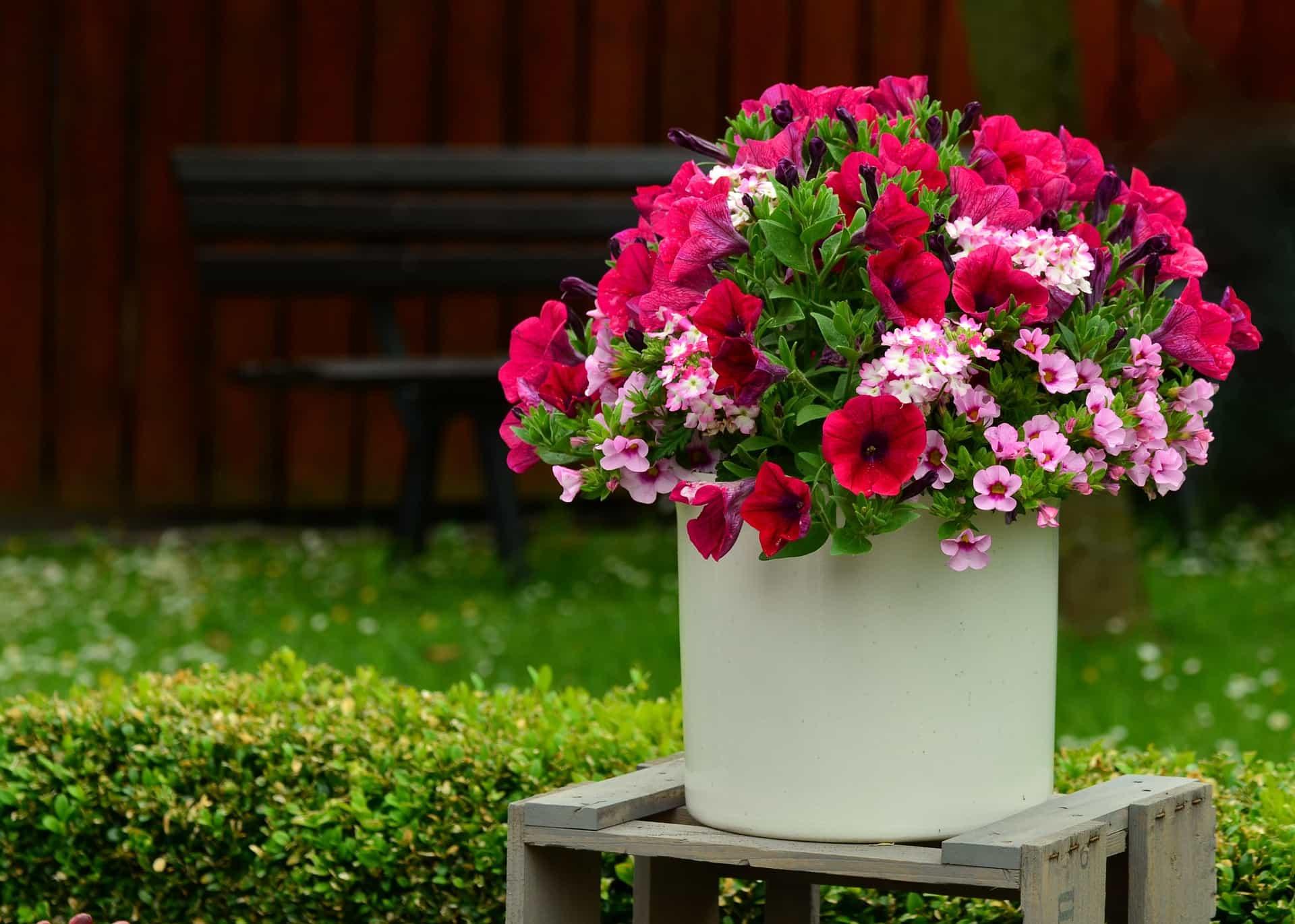 Blumentopf sorgt für saubere Luft