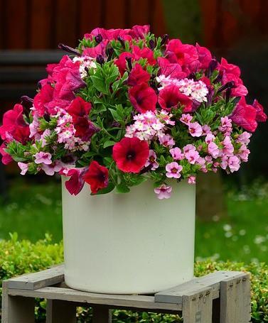 Saubere Luft durch Blumentopf