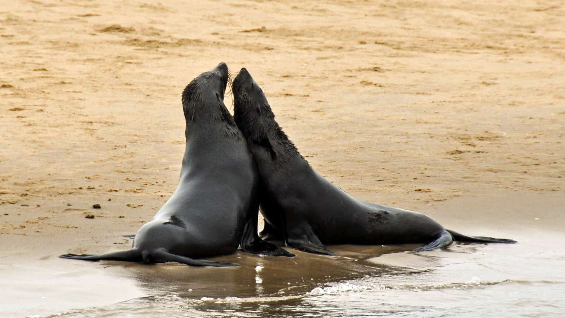 Zählung der Seehunde