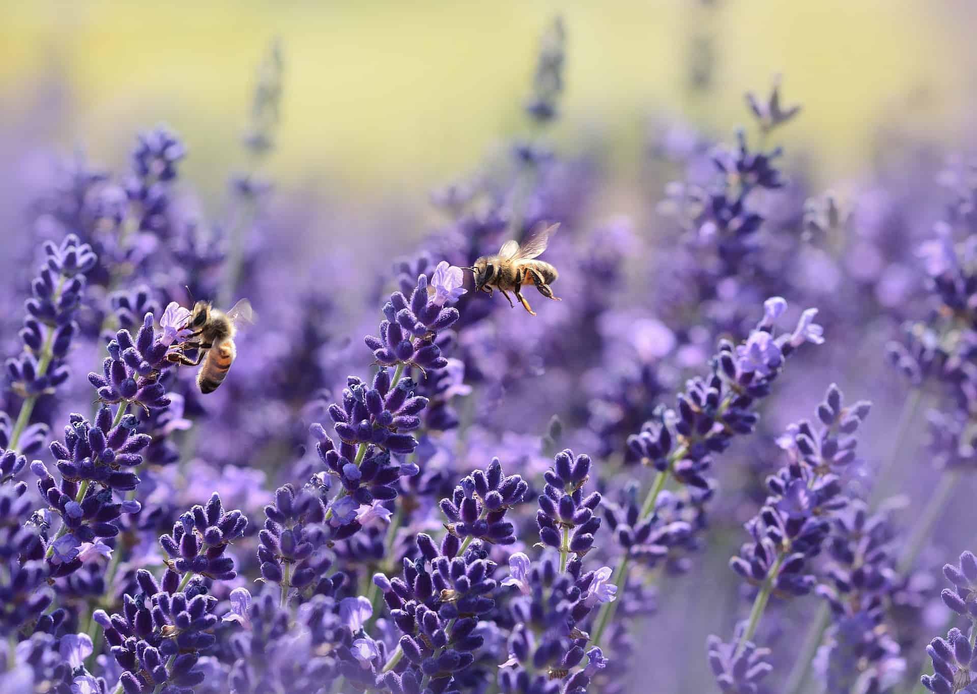Ehrenamtlicher Insektenzähler