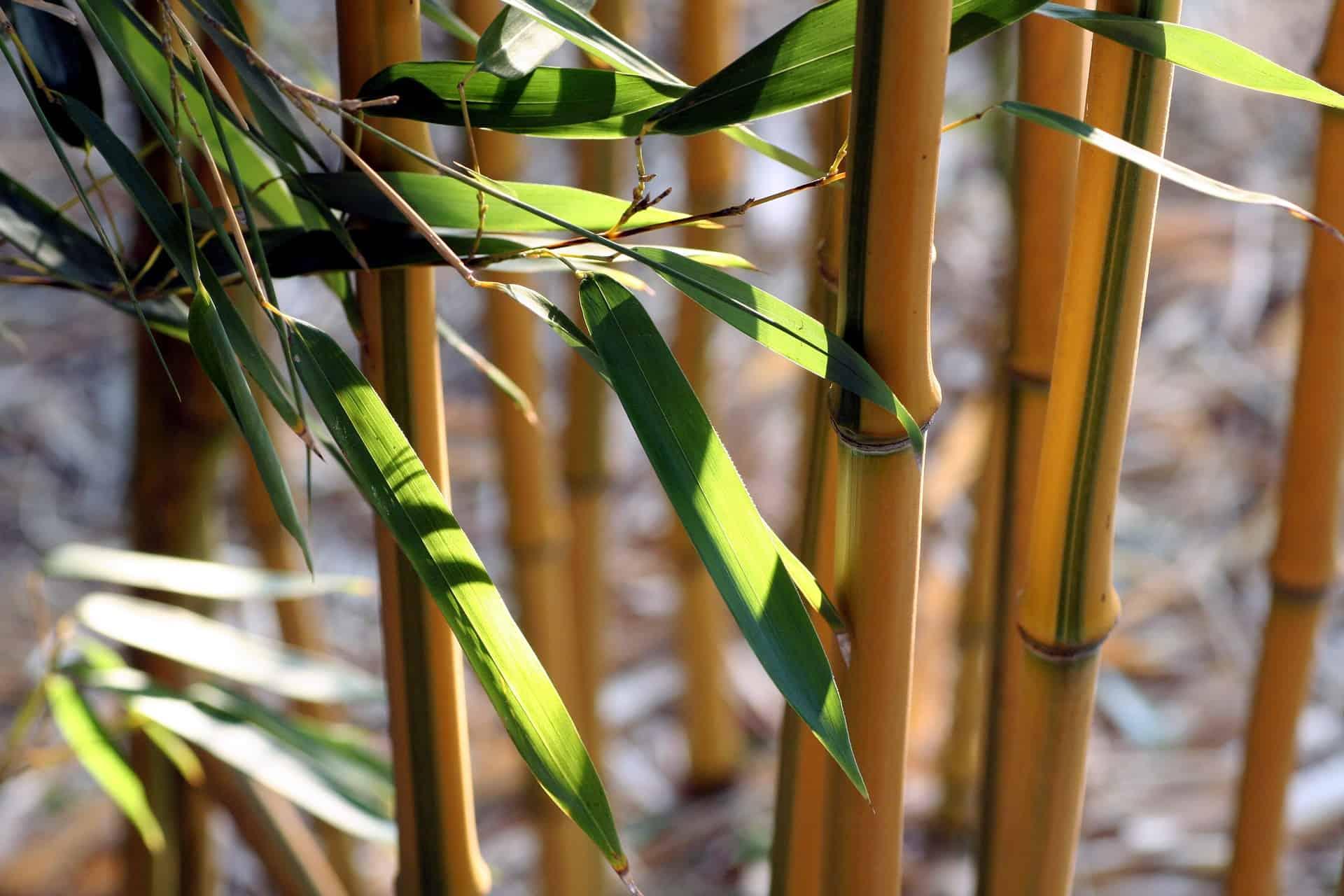 Toilettenpapier aus Bambus